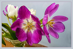 A bouquet of tulips (scorpion (13)) Tags: bouquet tulips flower color creative frame droplets nature winter livingroom photoart vase