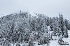 Mount Glory (kevin-palmer) Tags: december winter snow snowy cold jackson tetonpass highway22 tetons mountains afternoon cloudy overcast wyoming trees bridgertetonnationalforest tamron2470mmf28 nikond750 mountglory