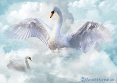 protecting (_Ann m_) Tags: swan swans birds mmm mmmchallenge peace sky clouds manipulation manipulationart magnificentmanipulatedmasterpieceschallenge photomanipulation photoshop