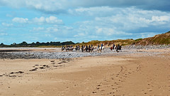 Riders on the beach (cmw_1965) Tags: newton bay beach riders horse horses equestrian equestrians sand sands porthcawl south glamorgan wales welsh merthyr mawr warrens burrows ogmore by sea riding school
