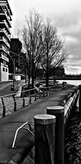 Symmetrien am Fähranleger (ECKE86) Tags: monochrome blackwhite trees elbe hamburg hafencity eos70d architecture jetty