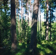 Skog 2 (Ättestupa) Tags: agfa isolette iii kodak vericolor 160 expired