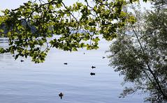 Vacances_0795 (Joanbrebo) Tags: bodensee konstanz badenwürttemberg de deutschland canoneos80d eosd efs1855mmf3556isstm autofocus llac lago lake lac
