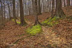 The Spirit Trail (LarryHB) Tags: creating meditating hdr photography horizontal forest nature path scenic trail missouri scottcounty missouriconservationareas landscape larrybraunphotography canon markii