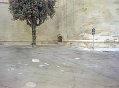 Lecce, Italy. (wojszyca) Tags: fuji gsw680iii 6x8 120 mediumformat fujinon sw 65mm kodak ektar 100 epson v800 city urban emptiness historic wall tree sign lece italy