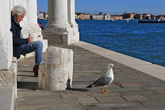 The people and the birds (atardecer2018) Tags: венеция италия 2018 люди venice italy people city winter