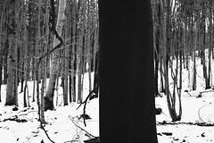 Black tree (kotmariusz) Tags: tree black drzewo czarne las forest winter zima trees nature 35mm film ilford xp2 400 olympus om40 filmisnotdead monochrome bw blackandwhite
