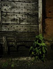 Old door - DSC6594 wm 1400 (cleansurf2 Urbex) Tags: decay street door wood timber old worn urbex urban grime green brick brown red