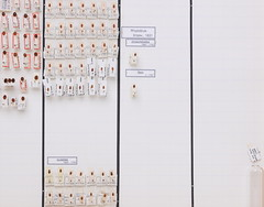 coleoptera-coccinellidae-henosepilachna-subcoccinella-rhyzobius-coccidula-cynegetis-R2-5637 (nmbeinvertebrata) Tags: ccbync nmbe5637 64114 coleoptera coccinellidae henosepilachna subcoccinella rhyzobius coccidula cynegetis r2
