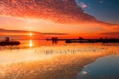"017_5925"" Sunrise @ Merced Wildlife Refuge (Shawn-Yang) Tags: sunrise merced wildlife refuge ca california landscape outdoor"