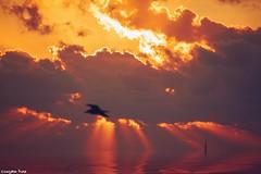 Every sunrise (gusdiaz) Tags: sunrise amanecer miami florida fl southbeach beautiful ocean sea wave reflection colorful tropical winter invierno canon canonphotography nature naturepnhotography