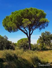 Alone (DOMVILL) Tags: alone arbre tree paysage landscape sky