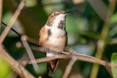 SC_Birds_12-26-18-7