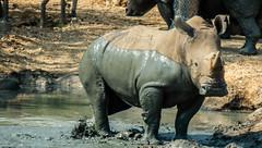 Safari World at Krung Thep Maha Nakhon, Thailand