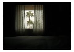 Kodak Portra 400 (reganh22) Tags: film filmphotography filmcamera filmisnotdead kodak portra400 analog analogphotography mamiyam645 mamiya m645 mediumformat 120film 80mmf28 arizona tucson color palmtrees buyfilmnotmegapixels