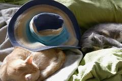 Lazy Caturday With Sunhat (Rich Renomeron) Tags: 118picturesin2018 fujifilmxt20 fujinonxf56mmf12r