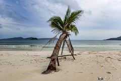 180802-36 La plage (2018 Trip) (clamato39) Tags: île island kohrong cambodge cambodia asia asie olympus plage beach ciel sky clouds nuages golfedethaïlande eau water sea mer sable palms