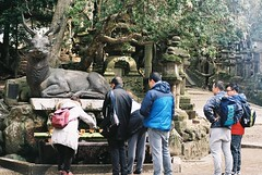 Deer Shrine (GingerKimchi) Tags: nara osaka japan travel nature asia film 35mm fujifilm canon deer canona1 2019 spring february march
