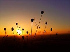No reason to get excited (Tobi_2008) Tags: sonnenaufgang sunrise himmel sky pflanzen plants sachsen saxony deutschland germany allemagne germania