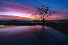Tree reflect (N.Janklab) Tags: sunset tree palm water lake landscape reflection beautiful trees nature sun african africa travel beach sunrise sky summer background scenic silhouette beauty colorful resort tourism pool reflecting view outdoor island autumn park light bright river natural orange blue