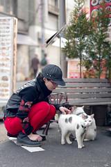_PXK7070 (Concert Photography and more) Tags: 2019 april 07 japan tokyo kamishakuji sakura ayumi shopping street bicycle pentax pentaxk1 k1ii cats repaints2019 streetphoto kamishakujii hdpentaxdfa50mmf14 hdpentaxdfa50mmf14sdmaw cat