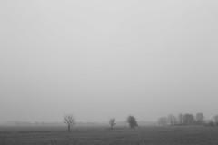if my heart is a bird (Mindaugas Buivydas) Tags: lietuva lithuania bw winter december fog mist tree trees bird birds sadnature delta nemunasdelta memelland winge favoriteplaces mindaugasbuivydas