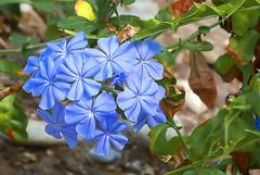 Flowers in Parc Phoenix in Nice, France 14/10 2018. (photoola) Tags: nice parcphoenix blommor flower fiori fleurs kwiaty blumen photoola france cotedazur frenchriviera frankrike
