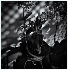 Lomography (Black and White Fine Art) Tags: lomography lomo holga holga120n kodakbw400cnexpired2007 kodakd76 lightroom3 silverefexpro2