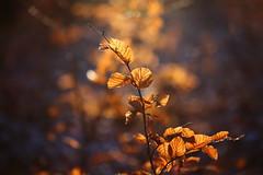 Winterblues (geraldtourniaire) Tags: canon schärfentiefe eos6d ef ef28100lmacroisusm licht l natur nature bokeh blatt baum