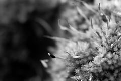 Cellule ? (Meculda) Tags: abstrait abstract natural naturel blackandwhite noiretblanc noirblanc blackwhite monochrome macro macrophotography forme