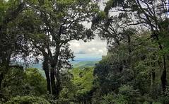 natureza (jakza - Jaque Zattera) Tags: bosque árvoes natureza