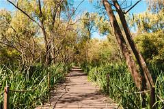 Eco Area (Sol Caseres) Tags: nature naturaleza rio verde green parque reserva vegetacion avellaneda argentina buenoaires madera árbol bosque hierba