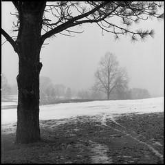 Tracks in the Fog (koni-omegaman) Tags: minneapolis minnesota usa hasselblad 150mm sonnar film 6x6 square blackandwhite landscape trees fog ultrafinextreme400 fullframe 500cm