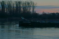 TMS GRIFFIOEN (Lutz Blohm) Tags: tmsgriffioen sunrise sonnenaufgang speyer tankschiff binnenschiffe binnenschifffahrt gütermotorschiff rhein rheinschifffahrt sonyfe24105mmf4goss sonyalpha7aiii rheinzutal
