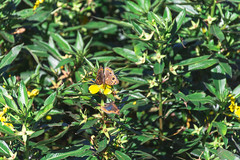 Eco Area (Sol Caseres) Tags: nature naturaleza rio verde green parque reserva vegetacion avellaneda argentina buenoaires hierba árbol macrofotografía planta jardín bosque mariposa