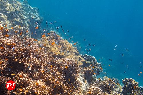 Underwater world. Coral reefs of Thailand         IMG_3443bs