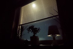 Moonshine through my window (therapyprojects) Tags: awake ikea lamp mobile moon moonshine night plants sky window