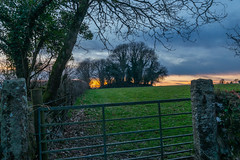 Winter Sunset (trevorhicks) Tags: gate field naked nude devon tavistock england grass tree leaves sky sunset outdoor wall fence branch stone sun clouds farm canon 5d mark iv tamron wire metal wood