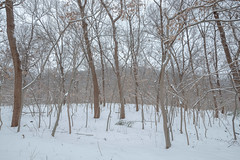 Snow Field (Picocoon图茧) Tags: snow field tree forest white cold bare branch calm tranquility nature