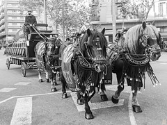 Tres Tombs de Barcelona 2019 (37) (Ismael March) Tags: barcelona trestombsdebarcelona trestombs santantoni sanantón blancoynegro