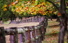Rustic farm fence and fall colours (Riley-Dobe) Tags: