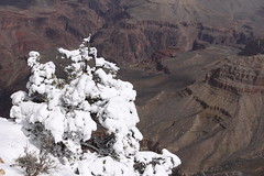 IMG_8693 (patterpix) Tags: grandcanyon arizona snow trees winter canyon storm