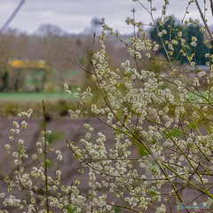 Marton Disused Railway 18th March 2019 (boddle (Steve Hart)) Tags: stevestevenhartcoventryunitedkingdomcanon5d4 marton disused railway 18th march 2019 steve hart boddle steven bruce wyke road wyken coventry united kingdon england great britain wild wilds wildlife life nature natural bird birds flowers flower fungii fungus insect insects spiders butterfly moth butterflies moths creepy crawley winter spring summer autumn seasons sunset weather sun sky cloud clouds panoramic landscape canon 5d mk4 100400mm is usm ii rugby unitedkingdom gb