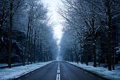 winter road (Jos Mecklenfeld) Tags: winter snow schnee sneeuw forest wald bos nature natur natuur nulbos westerwolde sonya6000 sonyilce6000 selp1650 sonyepz1650mm niederlande nederland road street weg terapel groningen netherlands nl straat strase nulweg