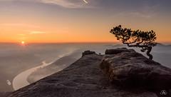 Sunrise on the Lilienstein, II (Uwe Kögler) Tags: saxony sachsen sächsischeschweiz sunrise sonnenaufgang fog misty landscape landschaft lilienstein kiefer wetterkiefer pine weather elbe elbsandsteingebirge felsen fluss himmel morgen morgenrot morning deutschland germany