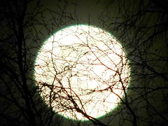 Supermoon Entangled in Tree (starmist1) Tags: tree moon entangled supermoon rising moonrise branch limb twig perch trunk sky blacksky spring march warming astronomy snow melting equinox springequinox east