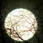 Supermoon Entangled in Tree thumbnail