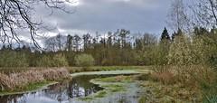 Landgoed Vledderhof - Vledder (henkmulder887) Tags: vledderhof vledder zwdrenthe landgoed landgoedvledderhof stichtinghetdrentselandschap water ven april bloesem lente