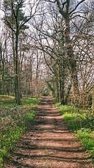 Path through woods (douglasjarvis995) Tags: abbey fountains ultramax kodak mju2 olympus brown green grass trees path