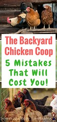 The Backyard Chicken Coop 5 Mistakes That Will Cost You (Read News) Tags: the backyard chicken coop 5 mistakes that will cost you